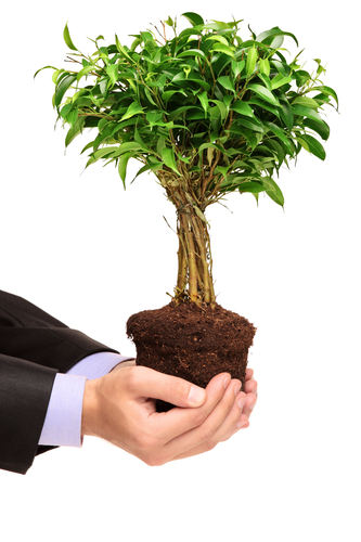 Cultivate Your Buyers for Evergreen Revenue Growth